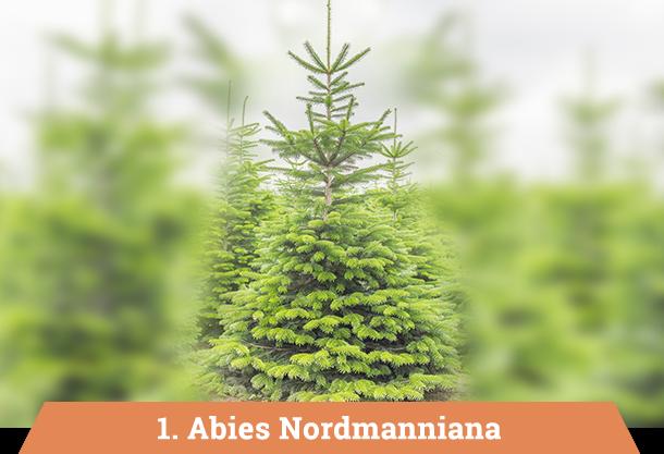 Kerstboom Kopen Baarn.Kerstboom Leverancier In Limburg Janssen Agro Plant