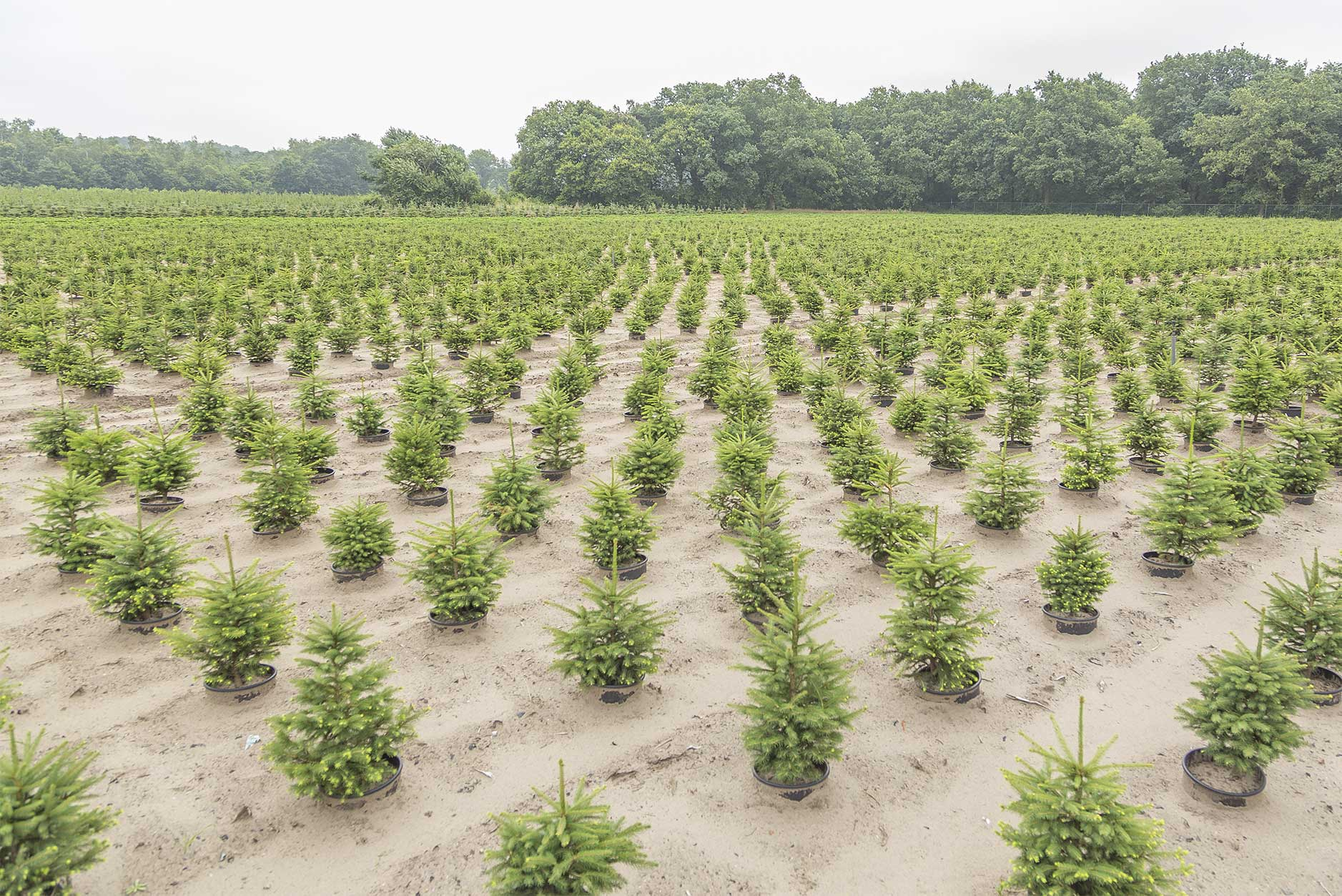 Jansen agro plant